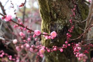 北野天満宮2011.3.11